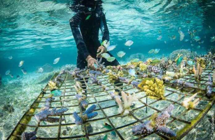 cliomakeup-solari-bio-6-coralli