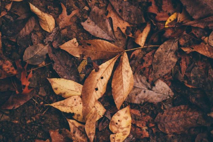 cliomakeup-perdite-marroni-8-foglie