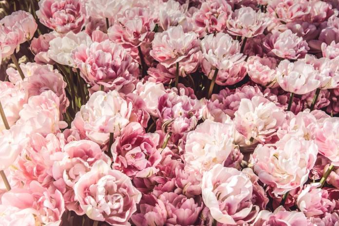 cliomakeup-colori-pastello-primavera-2020-2-rosa