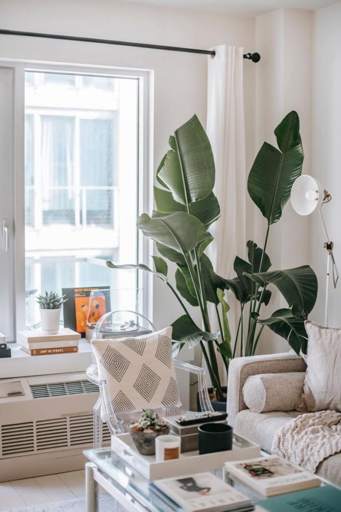 cliomakeup-energia-positiva-piante-verdi