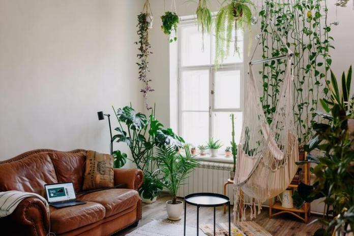 cliomakeup-energia-positiva-piante