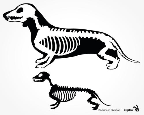 dachshund skeleton svg