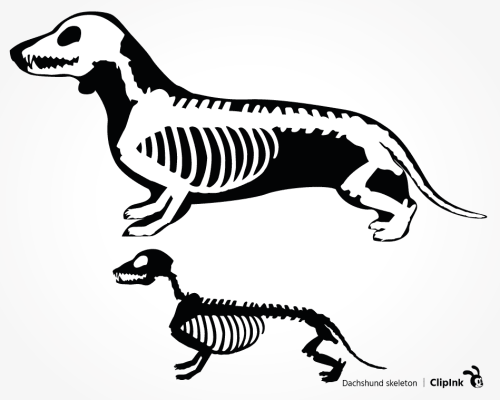 dachshund skeleton svg