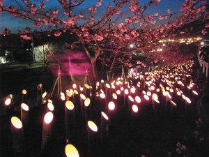 竹灯篭のあかりに浮かぶ頼朝桜