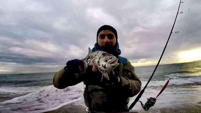 leccia amia pescata a spinning con artificiale jerck
