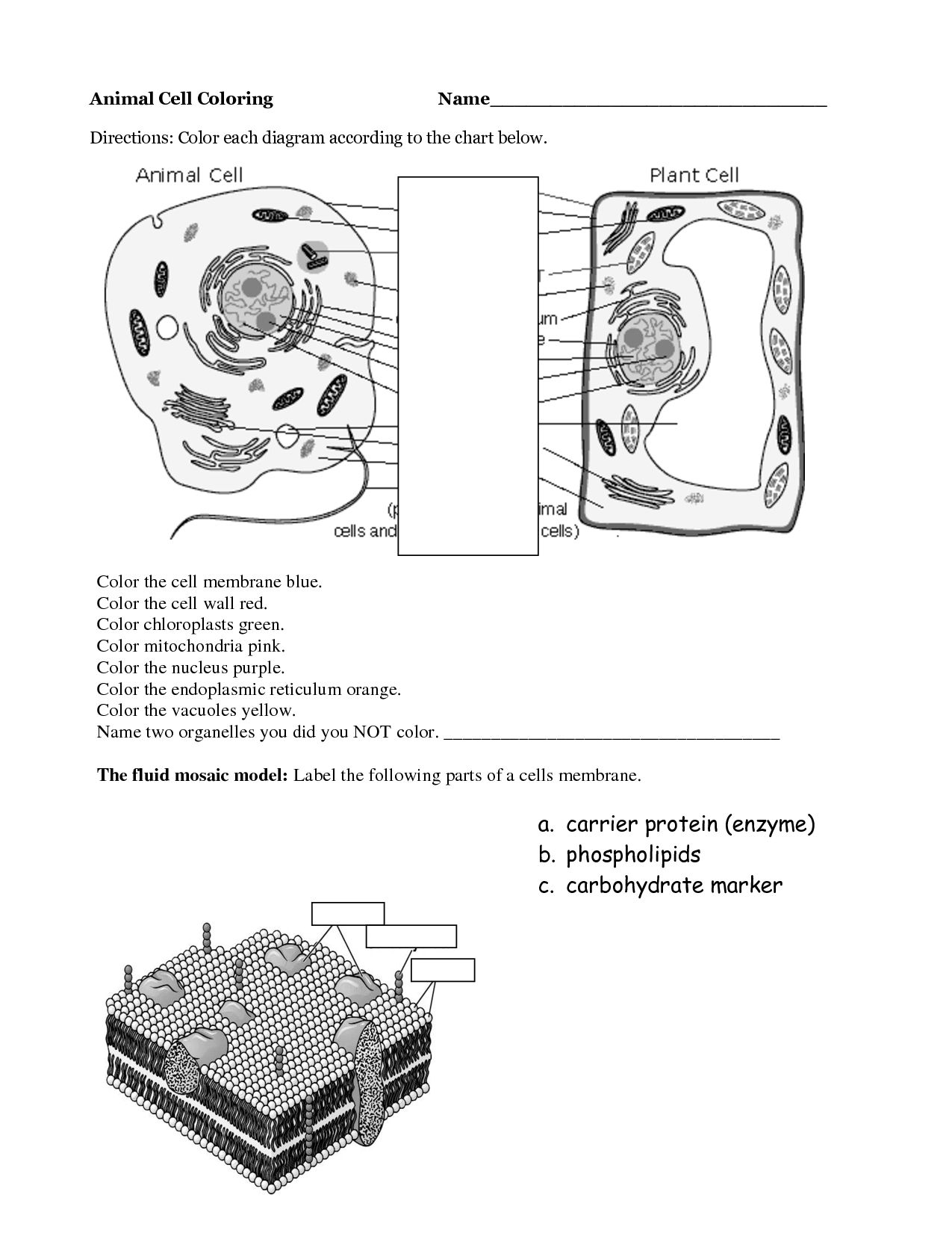 Easy Plant And Animal Cell Worksheet