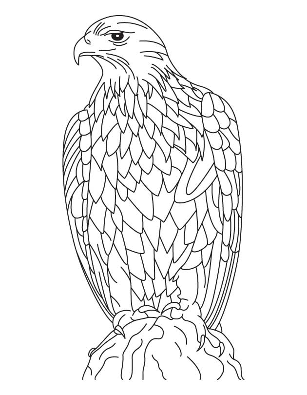Free Free Eagle Coloring Pages Download Free Clip Art Free Clip Art On Clipart Library