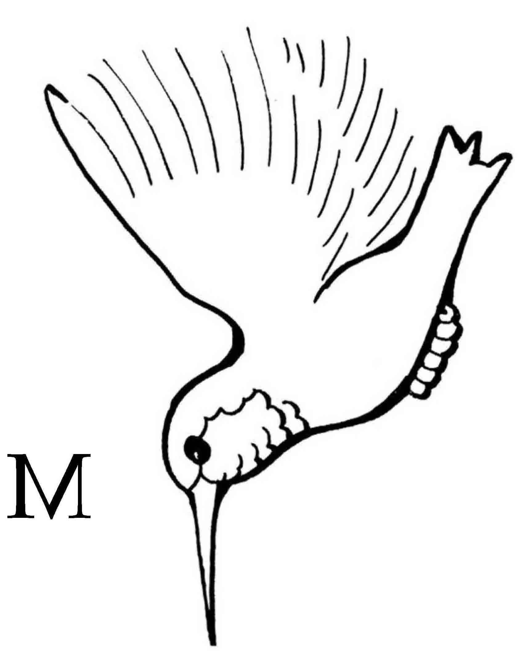 Free Hummingbird Cartoon Images Download Free Clip Art