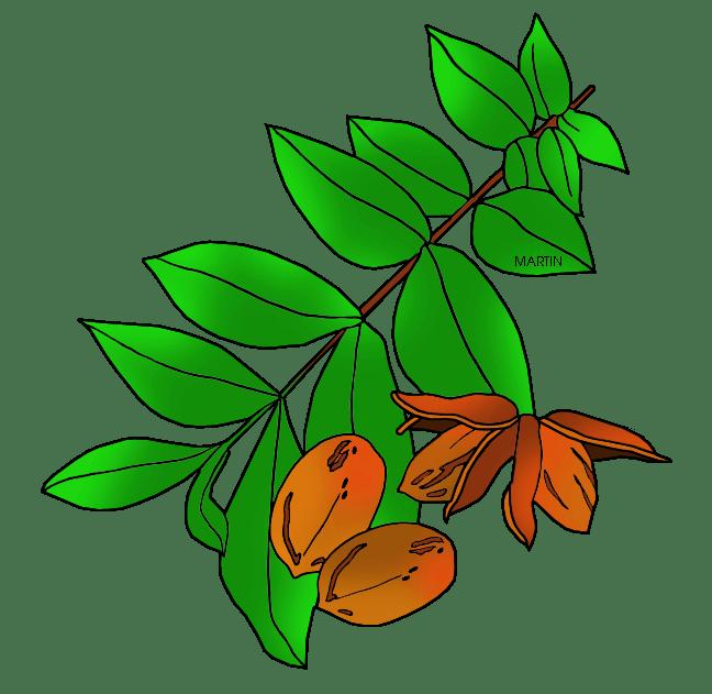 Pecan Nut Clip Art - Cliparts (648 x 631 Pixel)