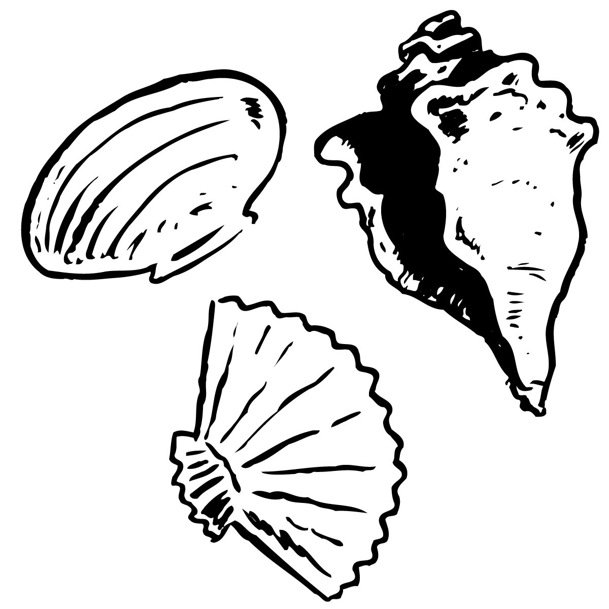 Free Seashells Cliparts Download Free Clip Art Free Clip