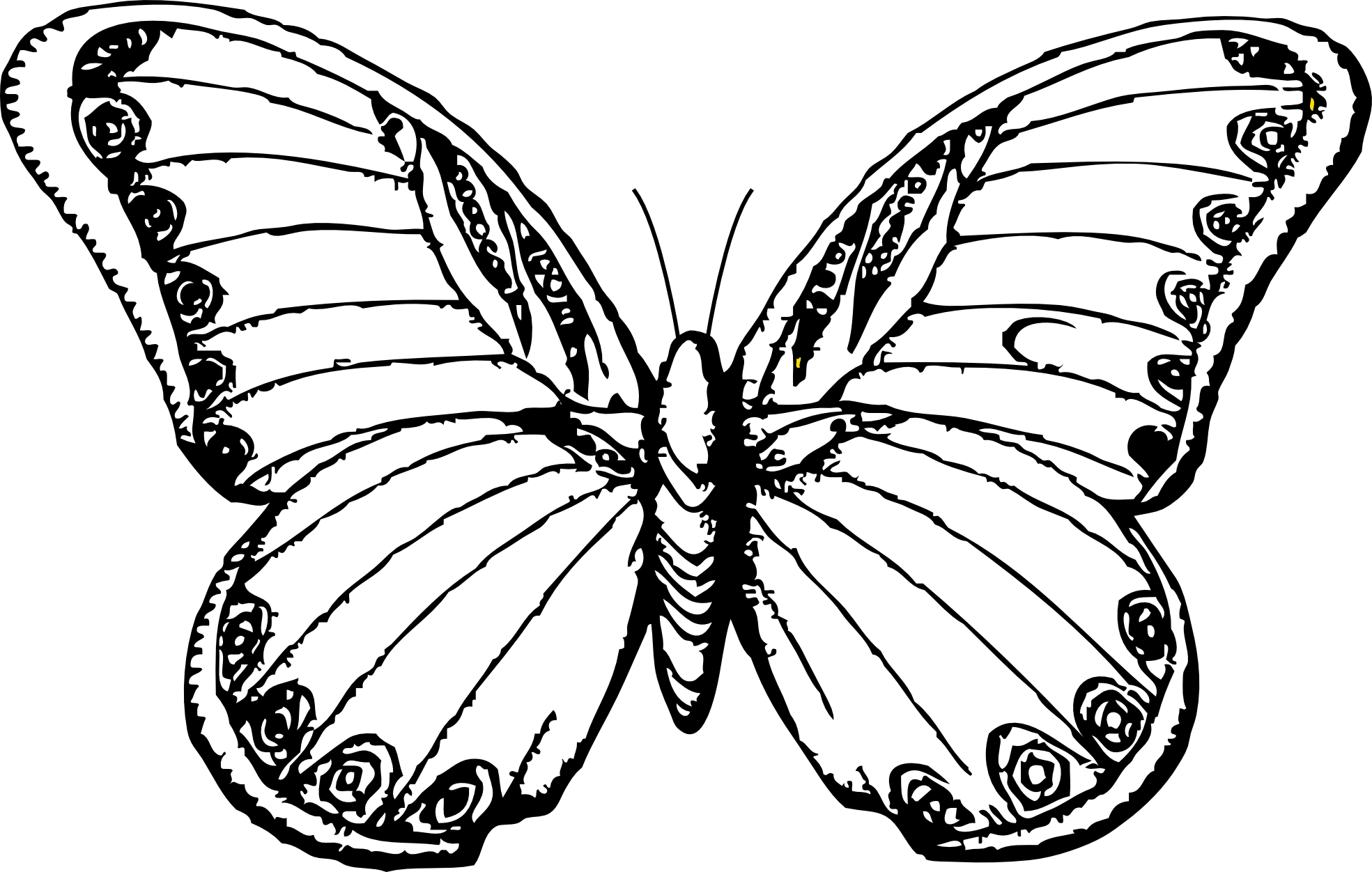 Free Butterfly Sketch Cliparts Download Free Clip Art
