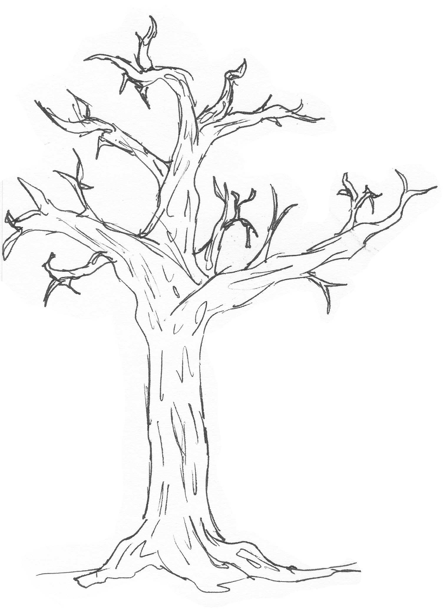 Free Simple Tree Download Free Clip Art Free Clip Art On