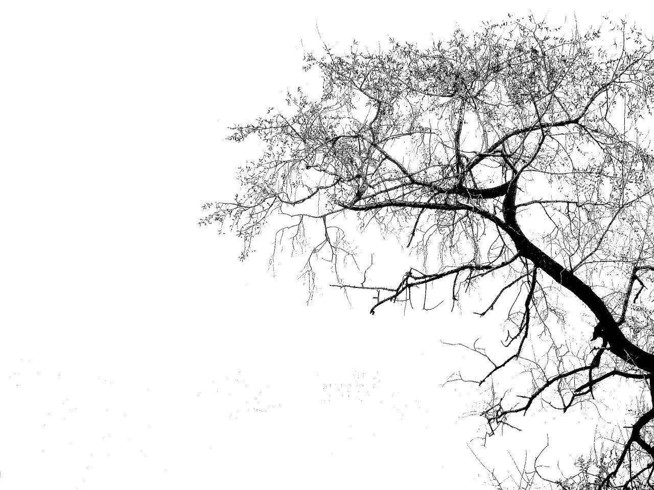 Oak Tree Silhouette Vector Free