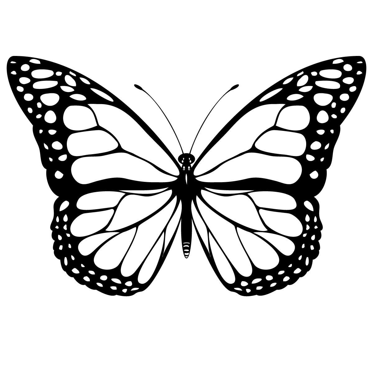 Butterfly Drawing With Details