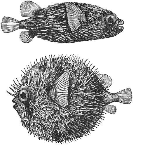 Free Fish Drawings Download Free Clip Art Free Clip Art