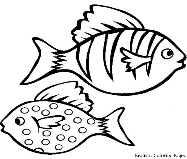 Cartoon Fish Drawings Free Printable Fish Coloring Pages
