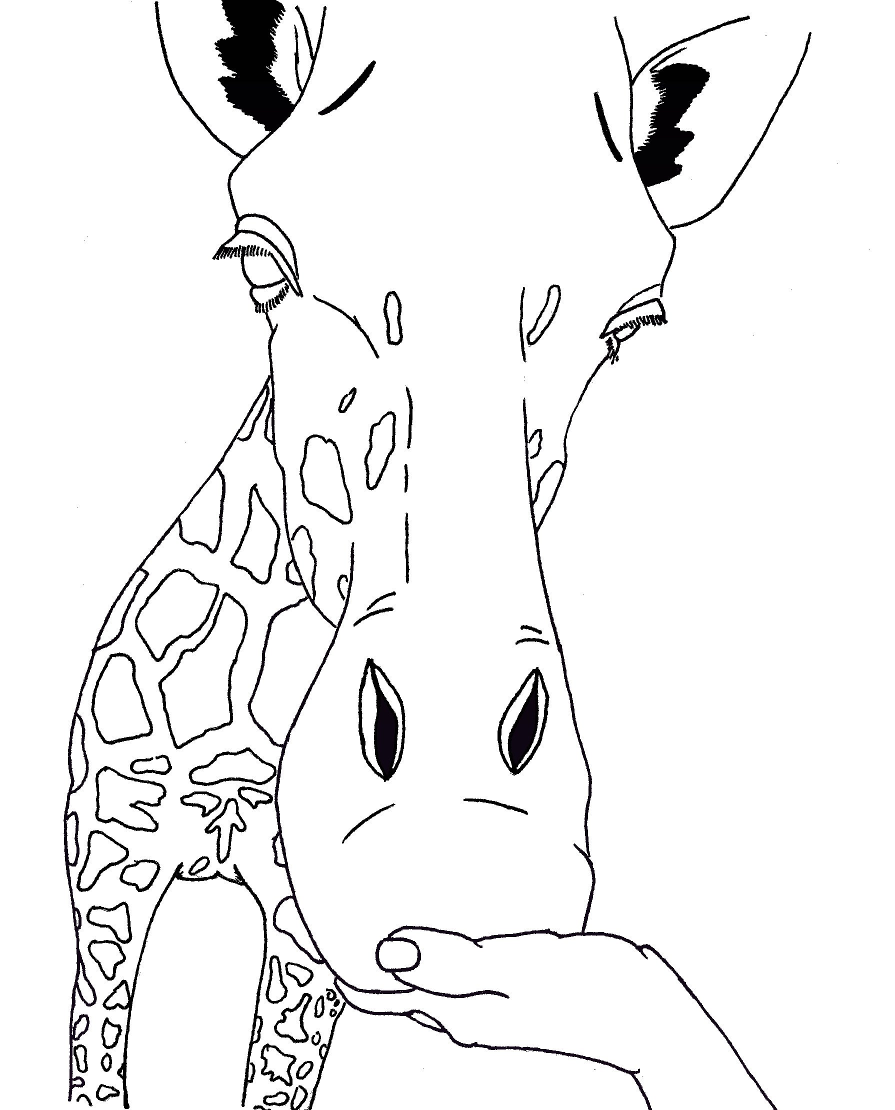 Free Animal Head Outline Giraff Download Free Clip Art Free Clip Art On Clipart Library
