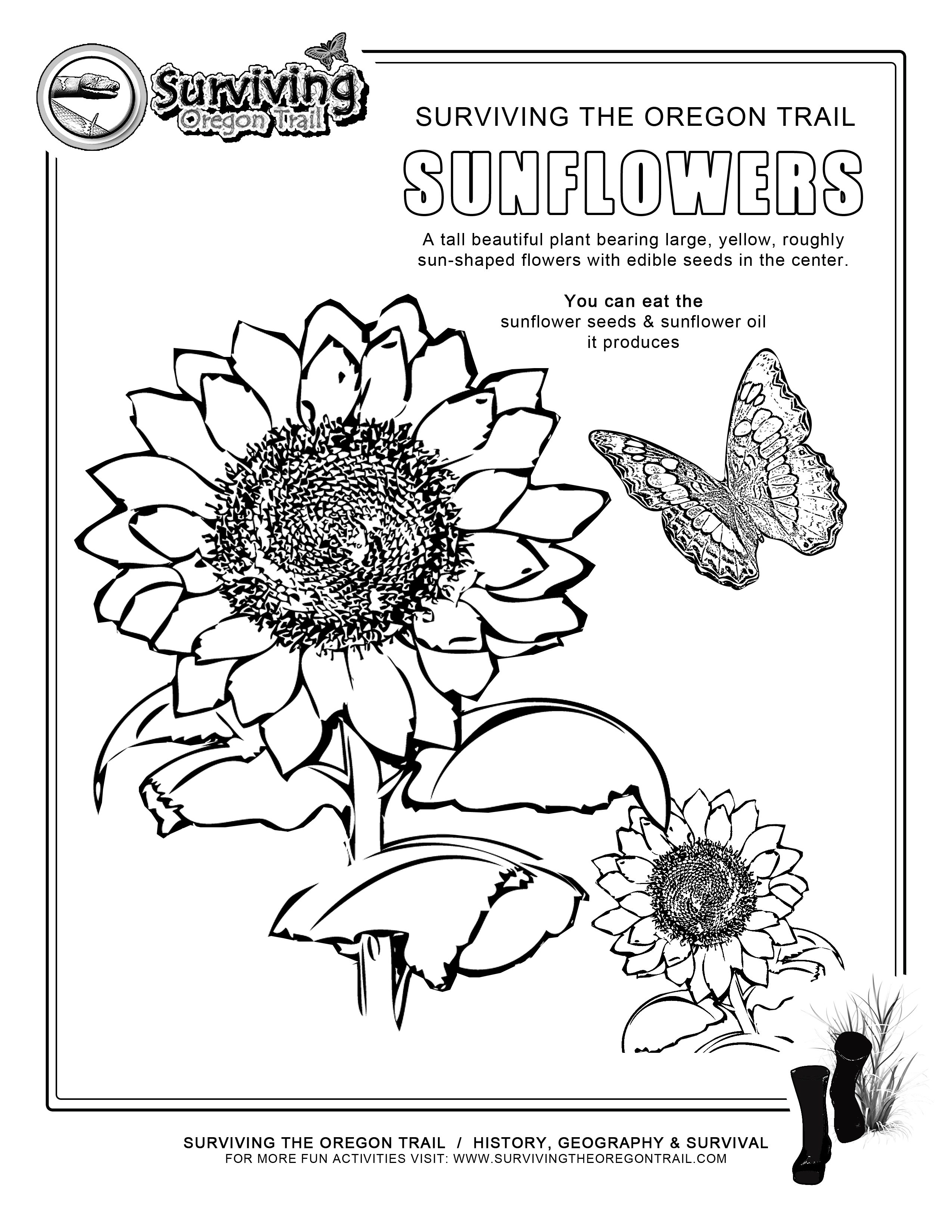 Free Sunflower Color Sheets Download Free Clip Art Free