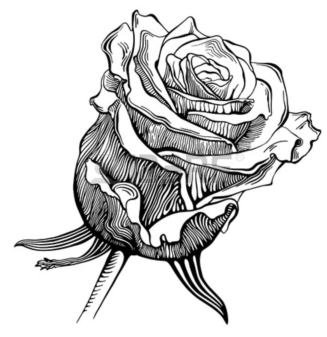 Free Drawings Of Roses In Black And White Download Free