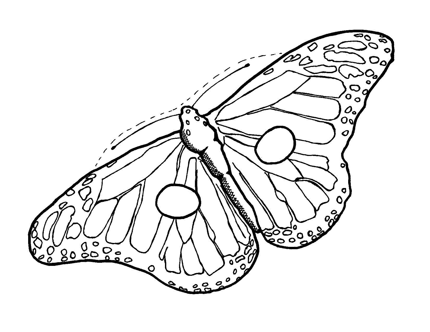 Free Monarch Butterfly Outline Download Free Clip Art