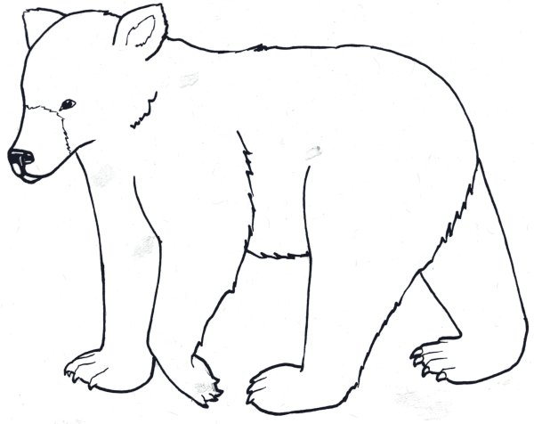 black bear coloring page # 6