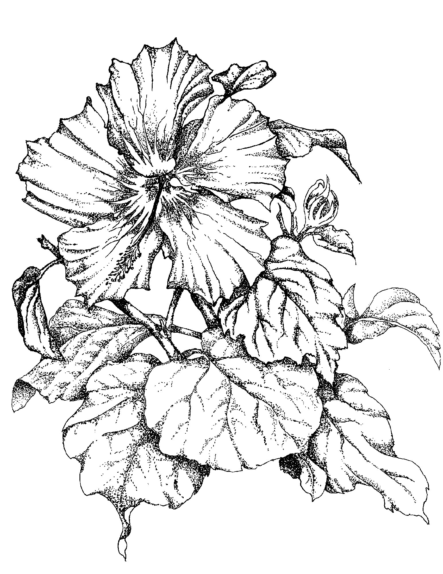 Hibiscus Black And White Drawings Hawaii Dermatology Tattoo