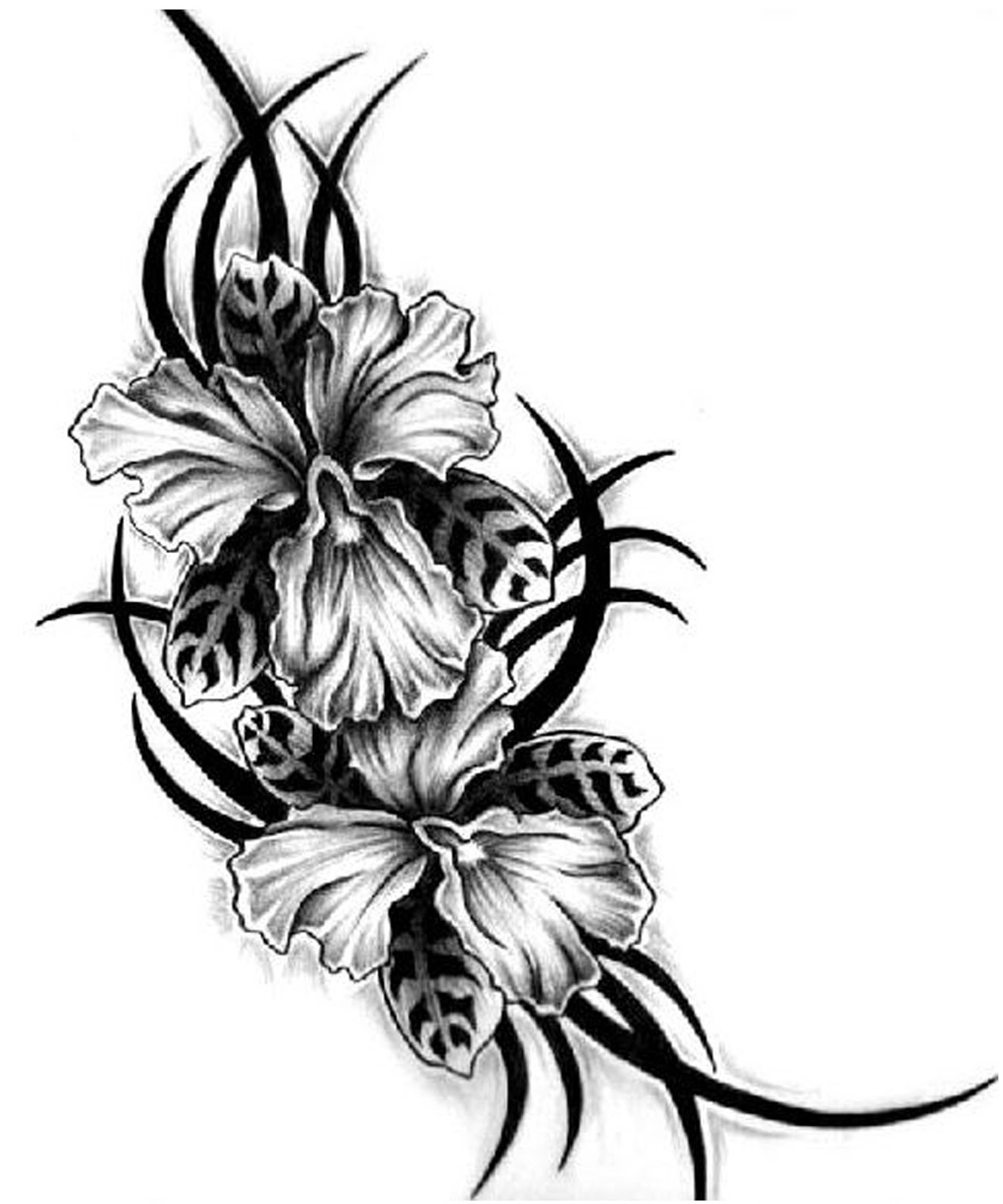 Free Hawaiian Flower Designs Download Free Clip Art Free