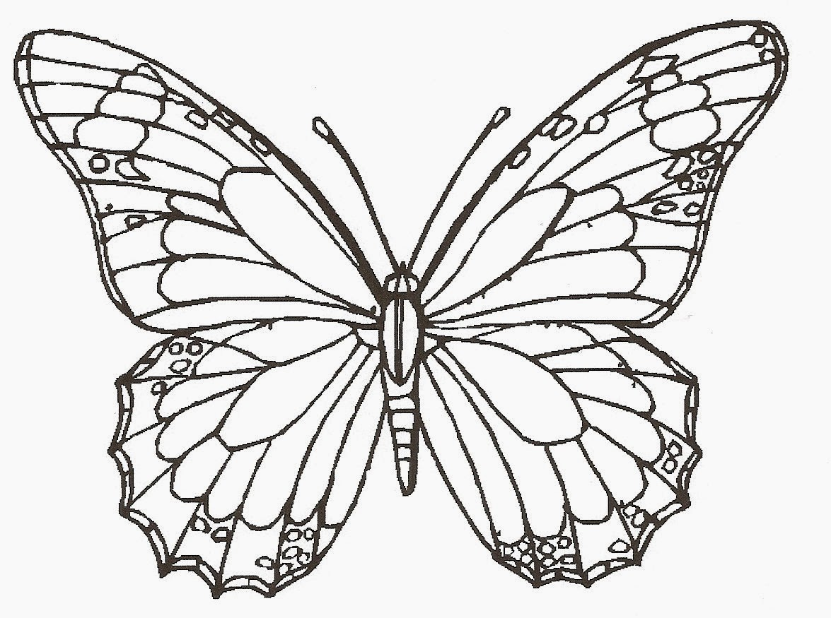 Free Butterfly Drawings Download Free Clip Art Free Clip