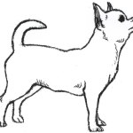 Printable Chihuahua Coloring Page Clip Art Library