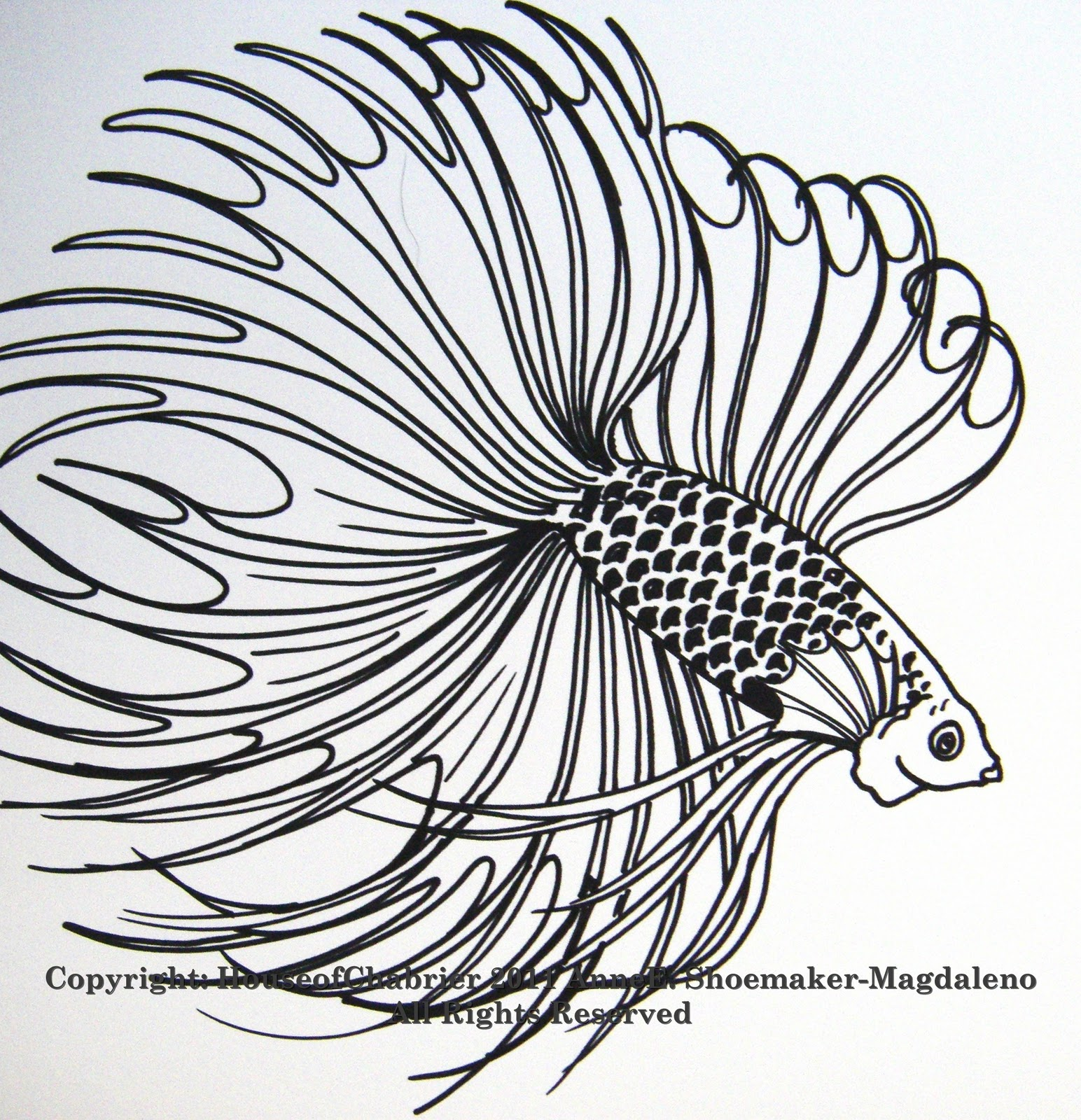 Betta Fish Drawing Free Coloring Pages Clip Art Library