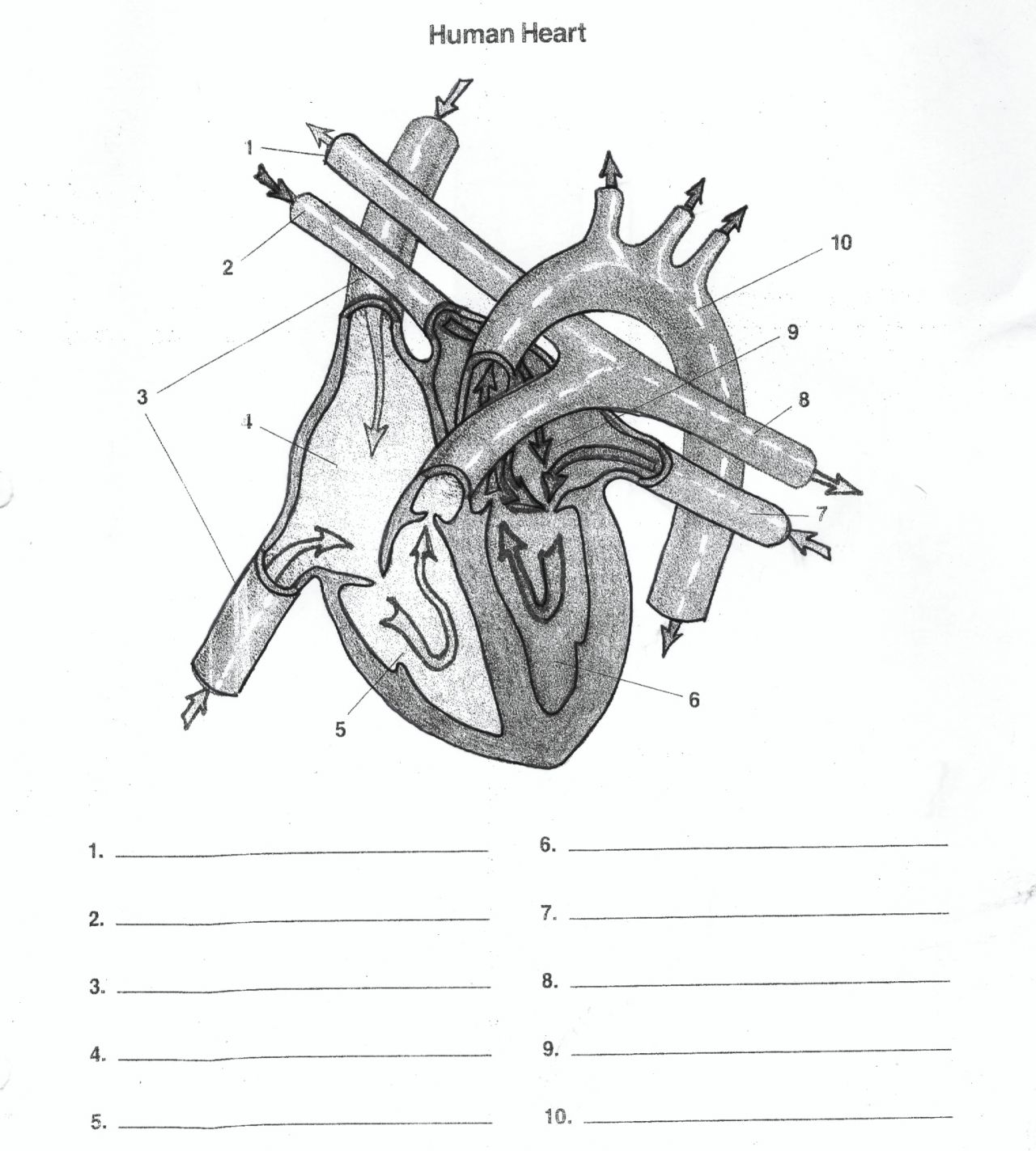 Free Blank Heart Diagram Download Free Clip Art Free