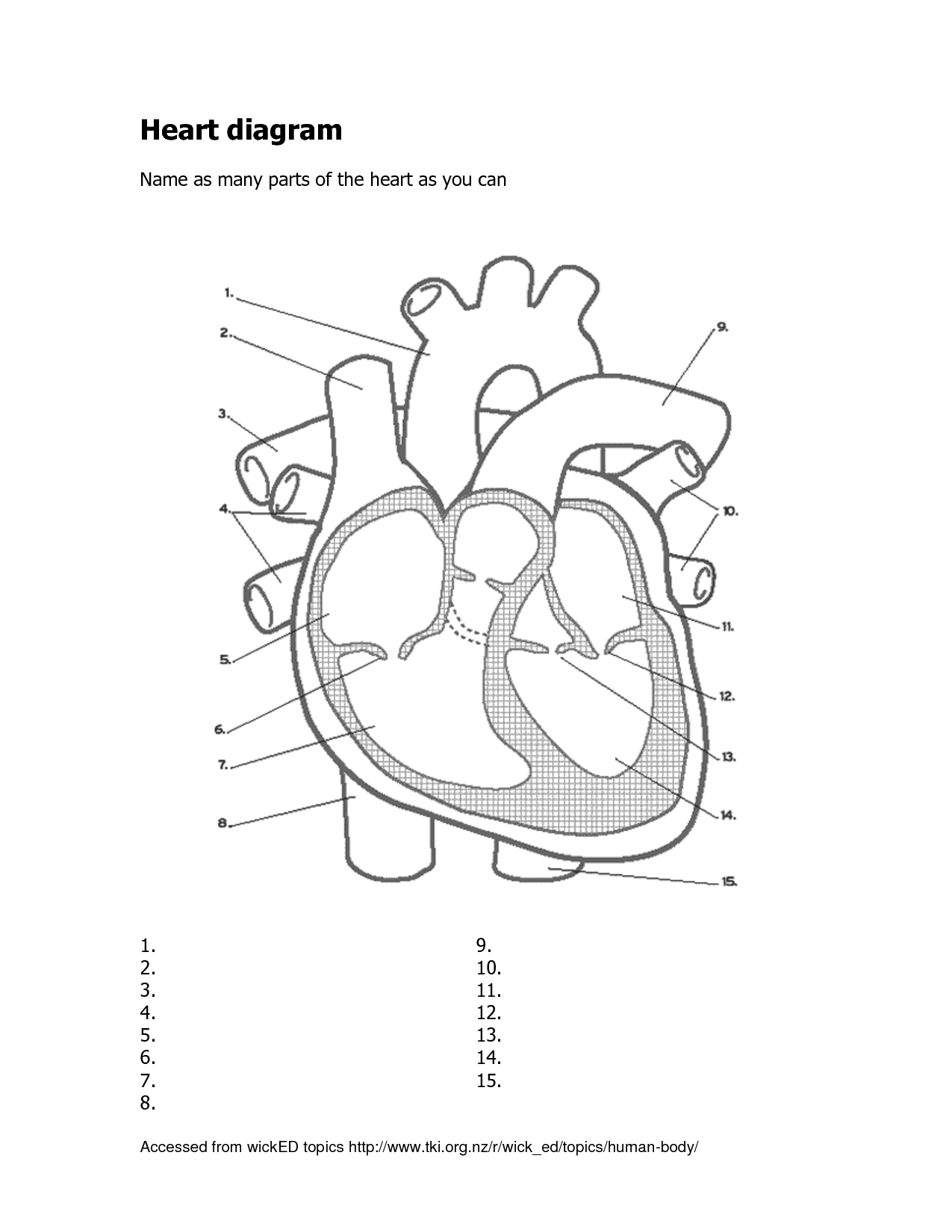 Heart Diagram Related Keywords Suggestions
