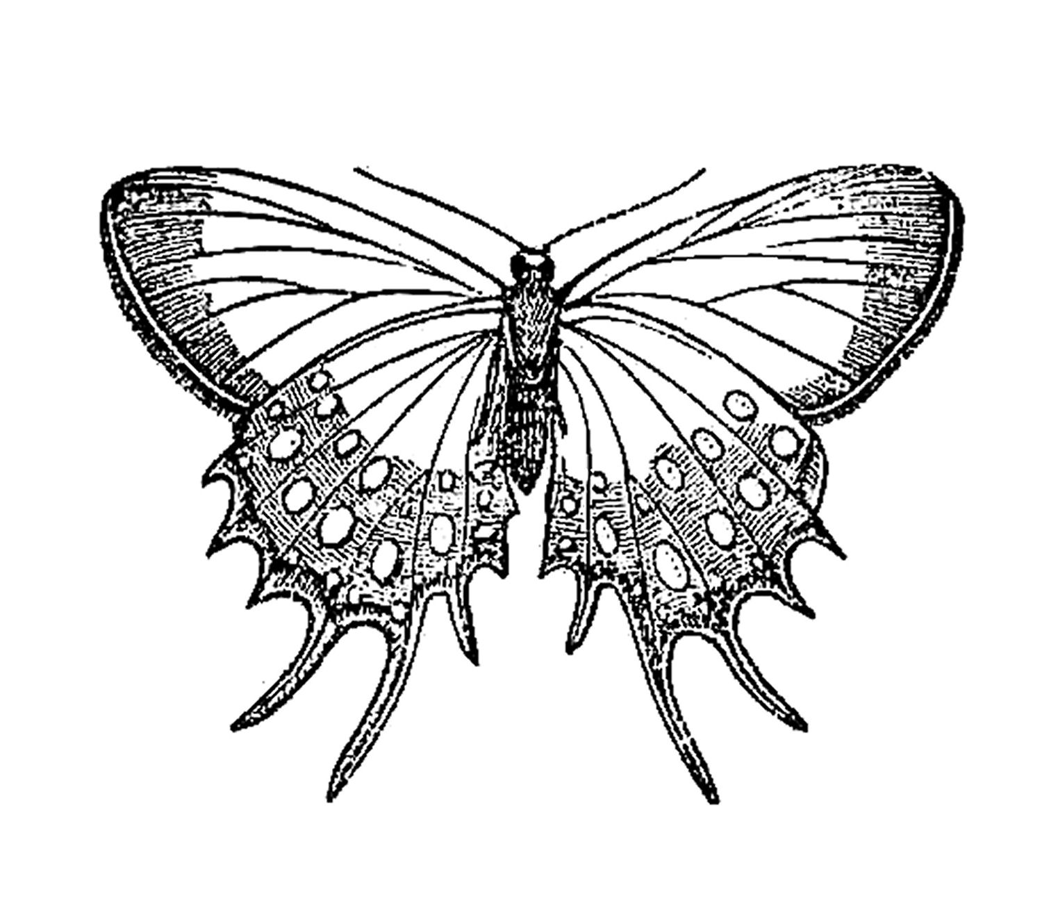 Free Butterfly Art Pictures Download Free Clip Art Free