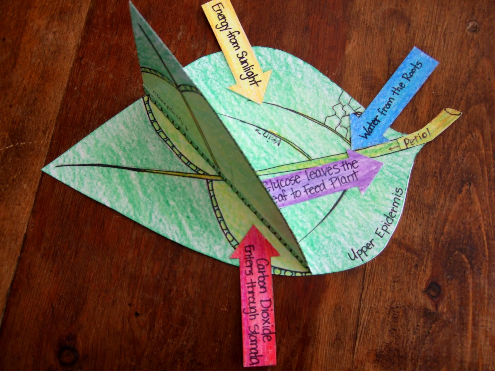 The Inspired Classroom Photosynthesis Model