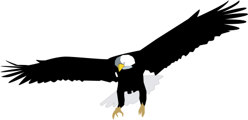 Haliaeetus Leucocephalus Bald Eagle Birds Vector