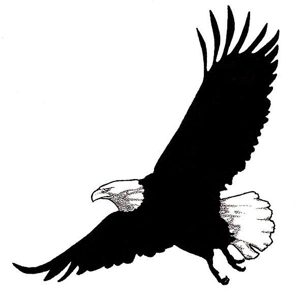 Bald Eagle Illustration Free Download Clip Art Free
