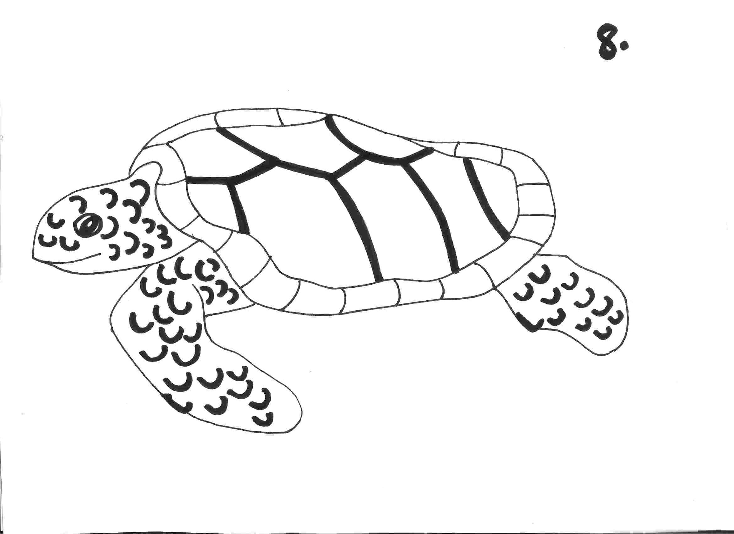 Free Turtle Drawing Download Free Clip Art Free Clip Art