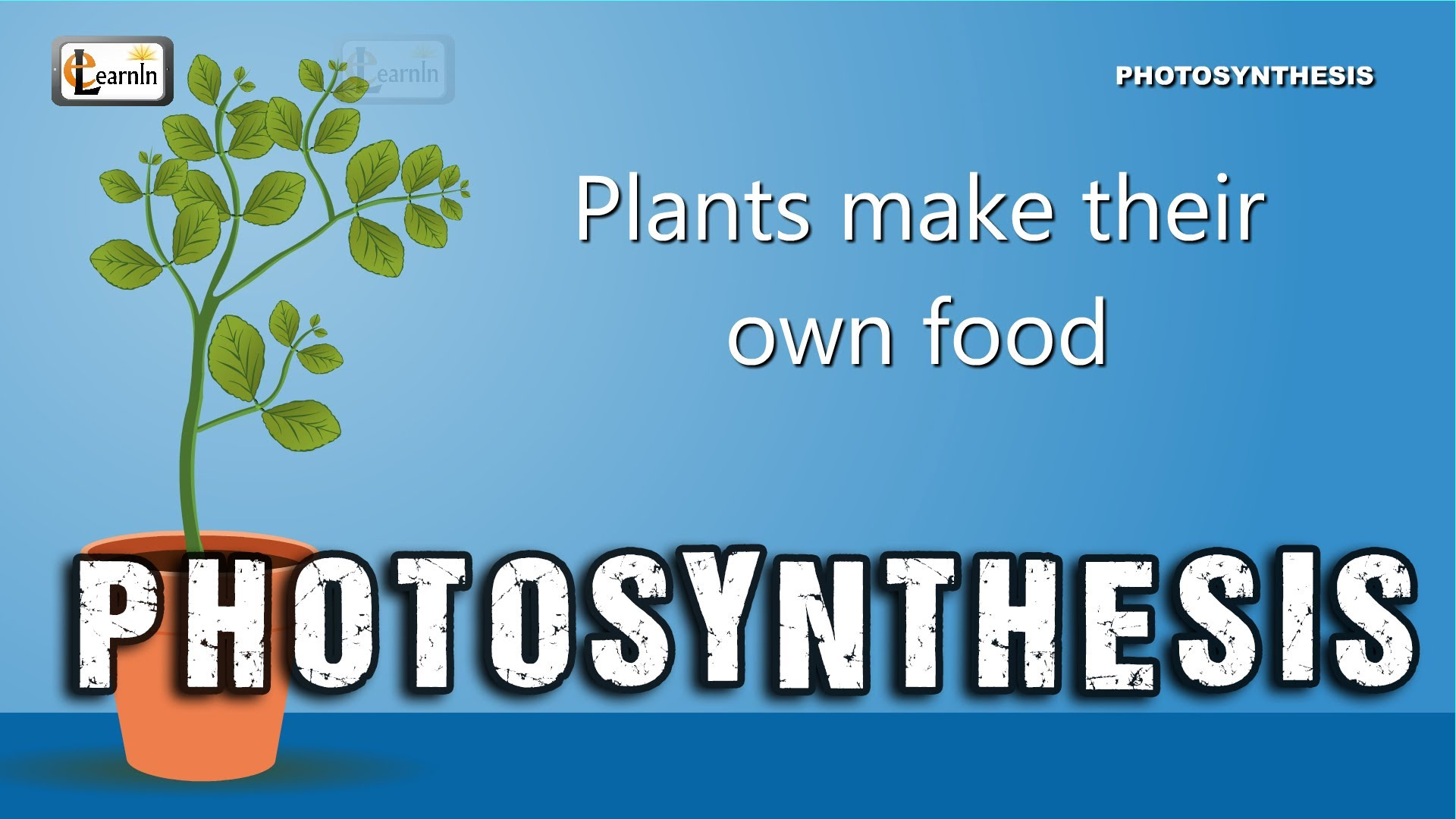 Free Photosynthesis For Kids Download Free Clip Art Free Clip Art On Clipart Library