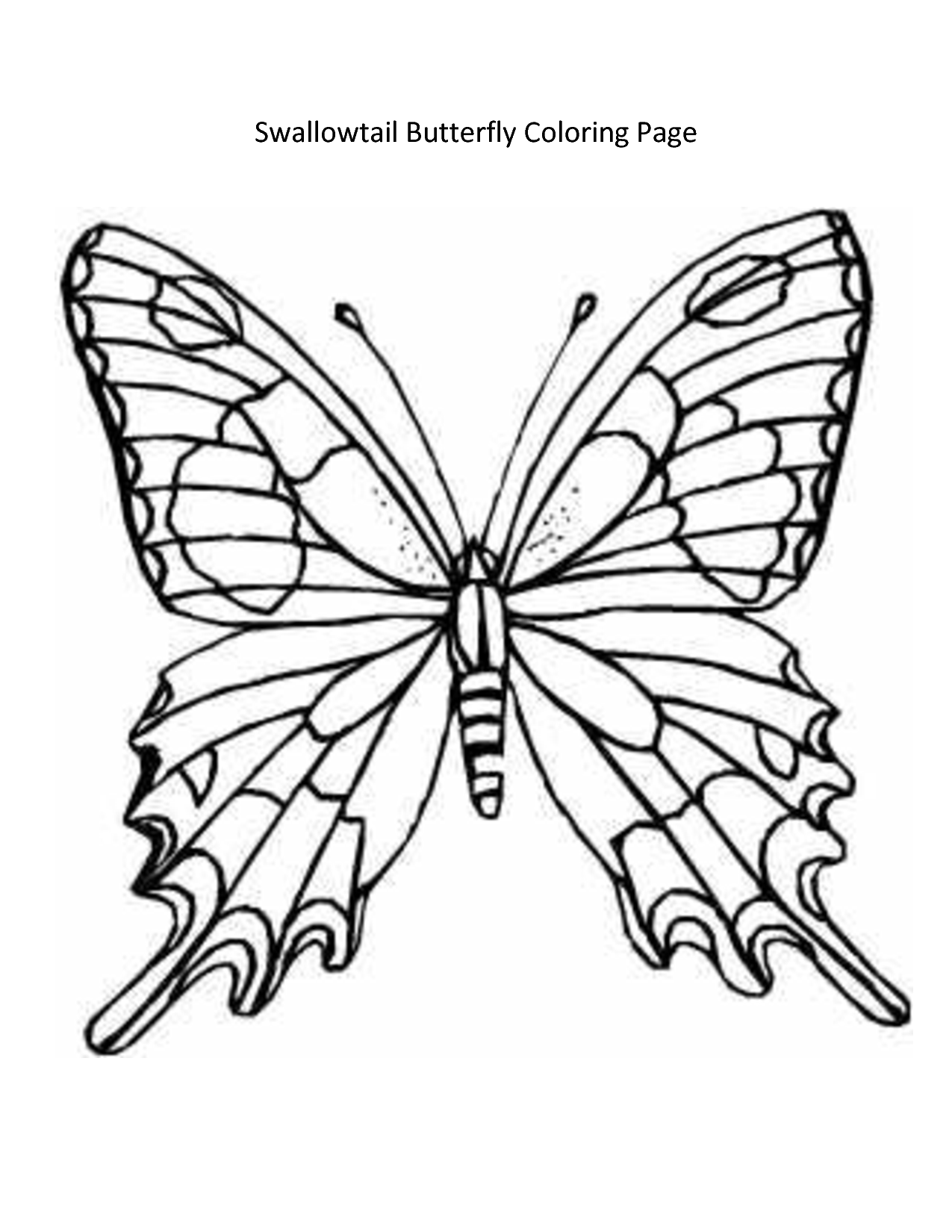 Images For Butterfly Wing Template