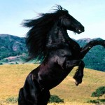 Free Mustang Horse Download Free Clip Art Free Clip Art On Clipart Library