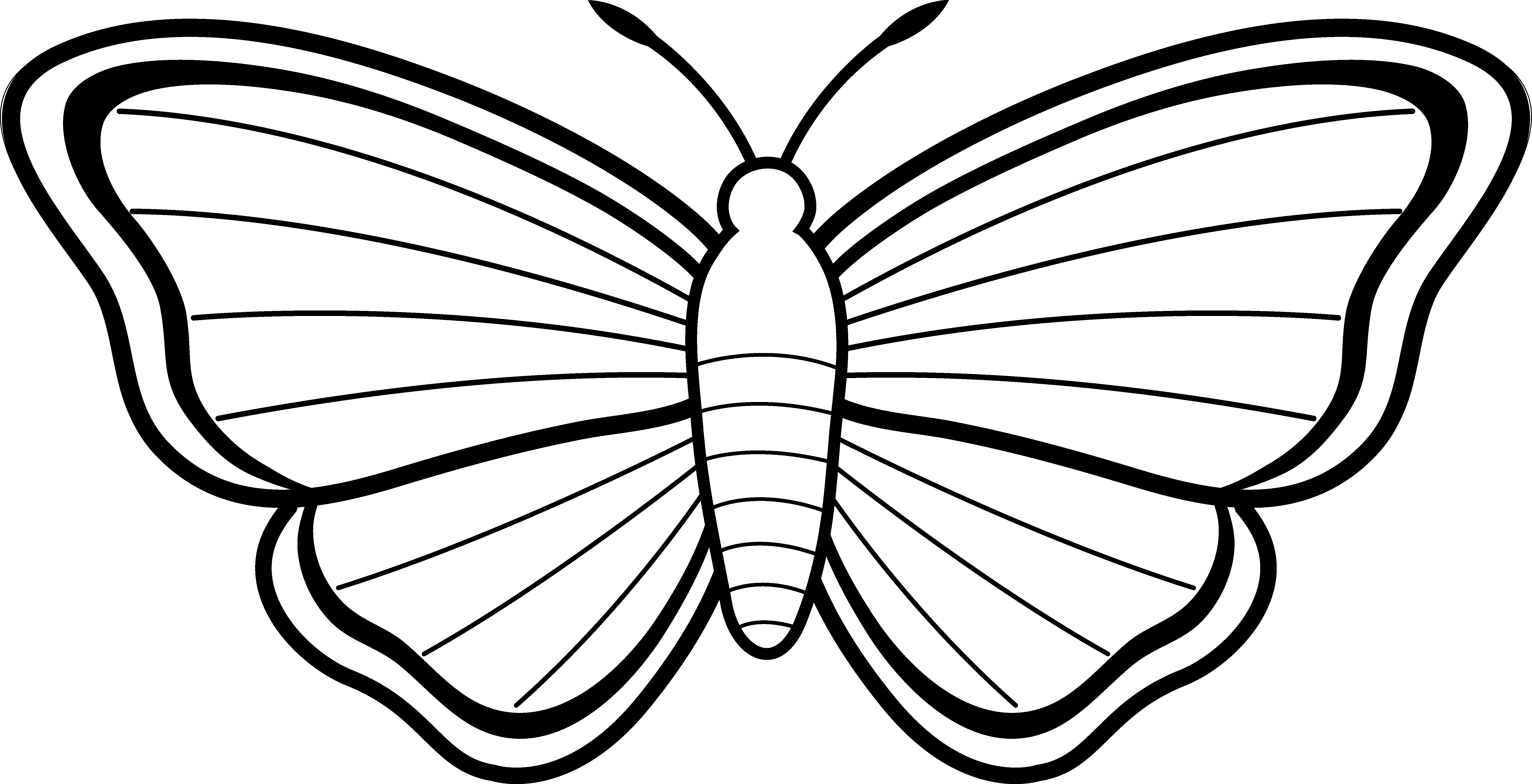 Free Butterfly Wing Outline Download Free Clip Art Free