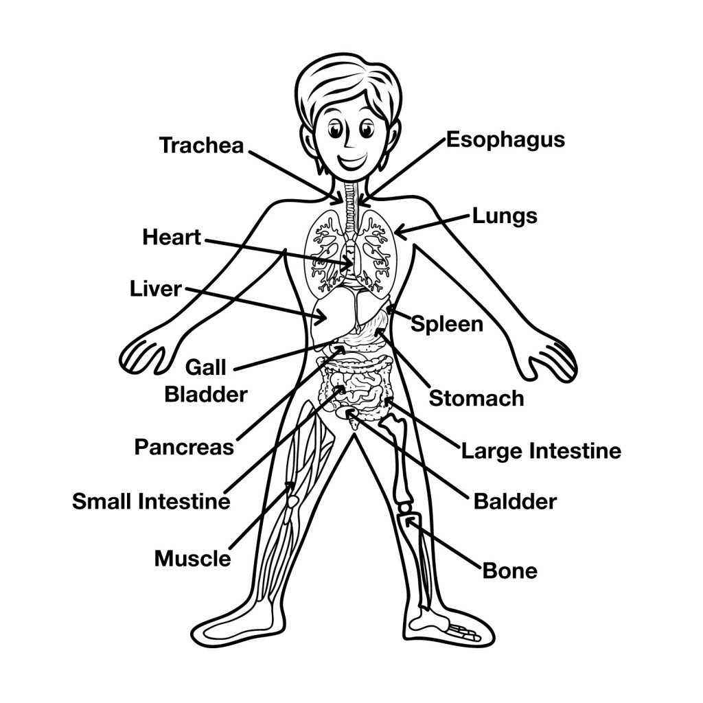 Free Parts Of The Body Download Free Clip Art Free Clip Art On Clipart Library