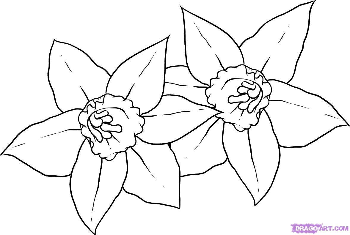 Free Daffodils Drawing Download Free Clip Art Free Clip