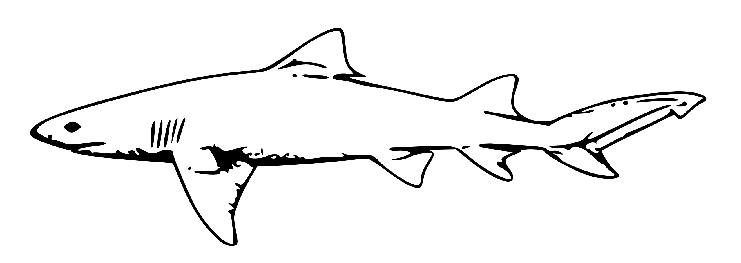 Free Great White Shark Clipart Download Free Clip Art