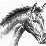 Free Black And White Horse Drawing Download Free Clip Art Free Clip Art On Clipart Library
