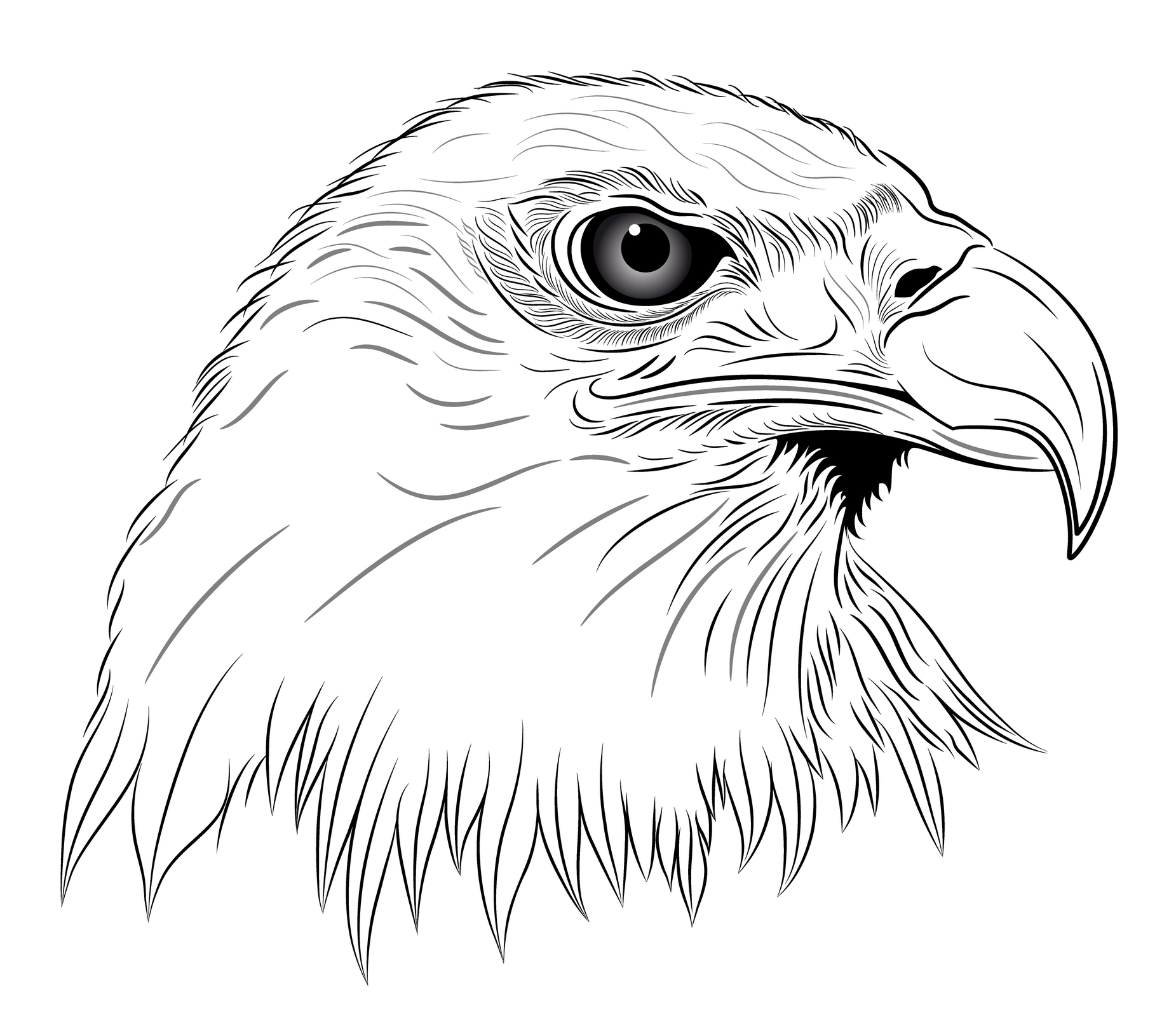 Drawing Eagle Head Tattoo Clip Art Library