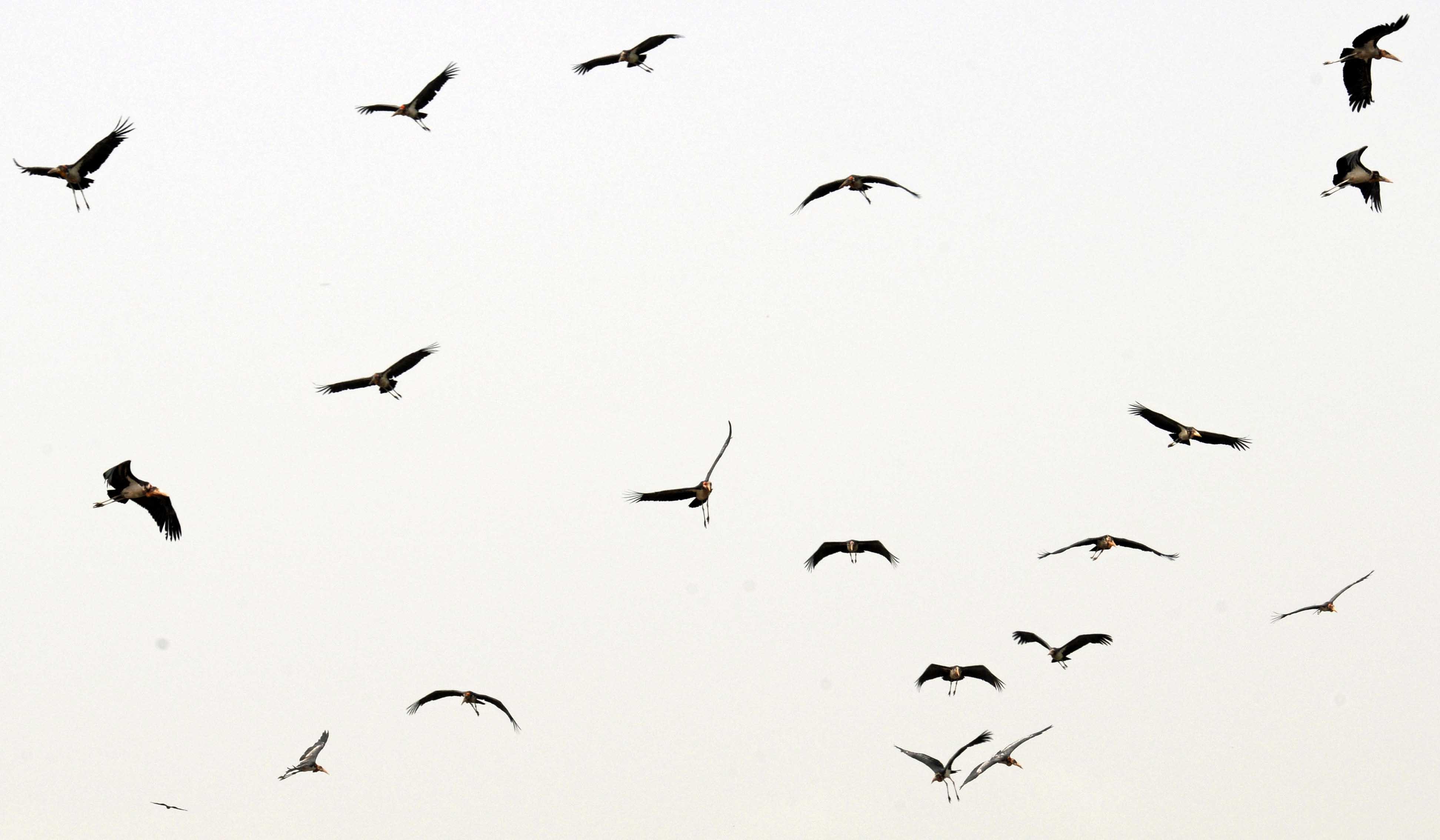 Free Flying Birds Download Free Clip Art Free Clip Art