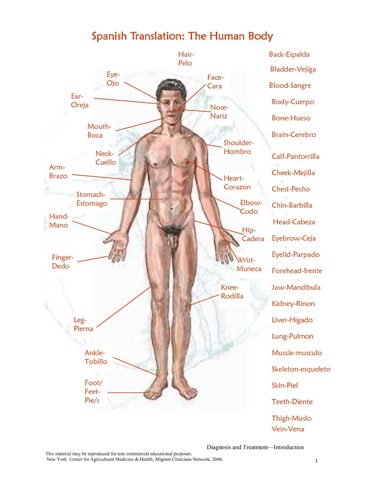 Human Body Diagram And Label