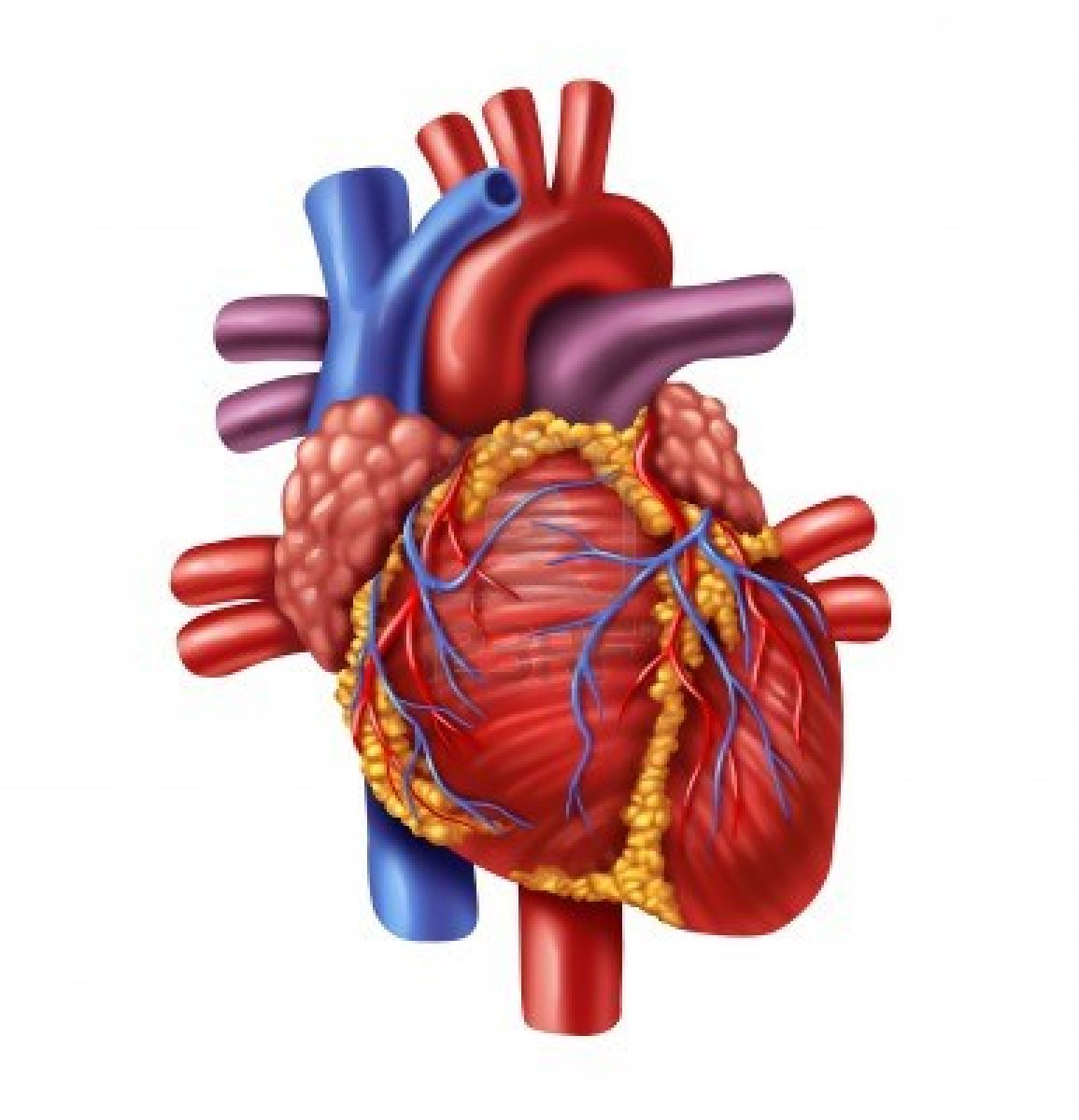 Free A Real Heart Download Free Clip Art Free Clip Art
