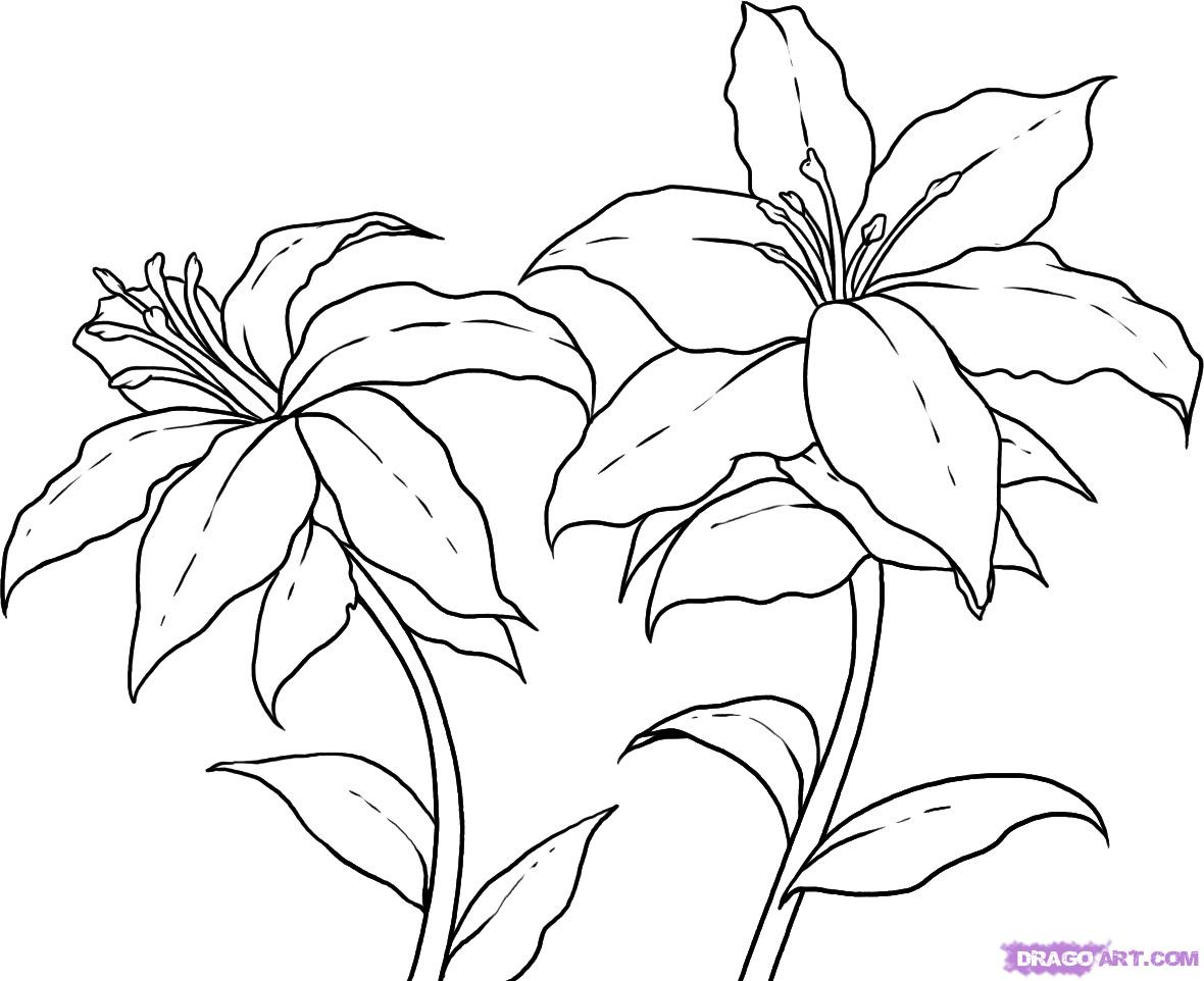 Free Flowers Drawing Download Free Clip Art Free Clip